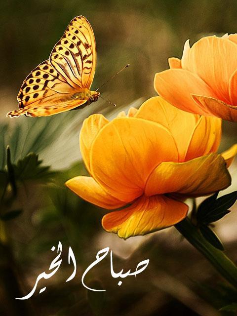 بالصور صور صباح جميل , فجر يوم جديد 413 9