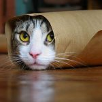 صور قطط مضحكة , هرة طريفة