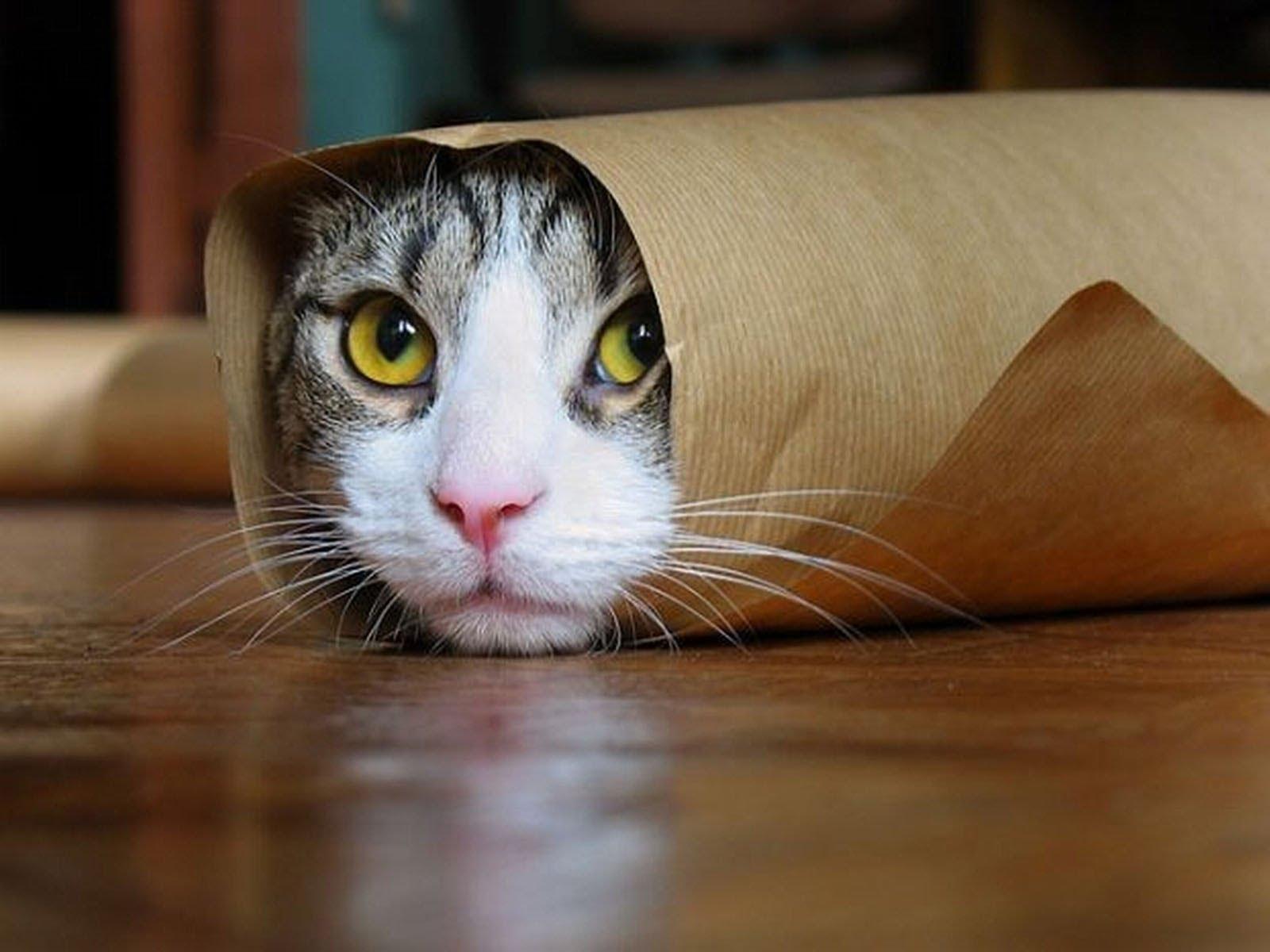 صوره صور قطط مضحكة , هرة طريفة