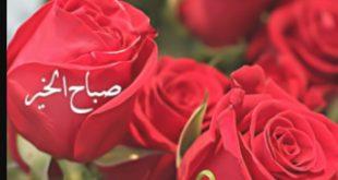 بالصور صباح الورد حبيبي , عبارات لبداية اليوم للحبيب 2430 9 310x165