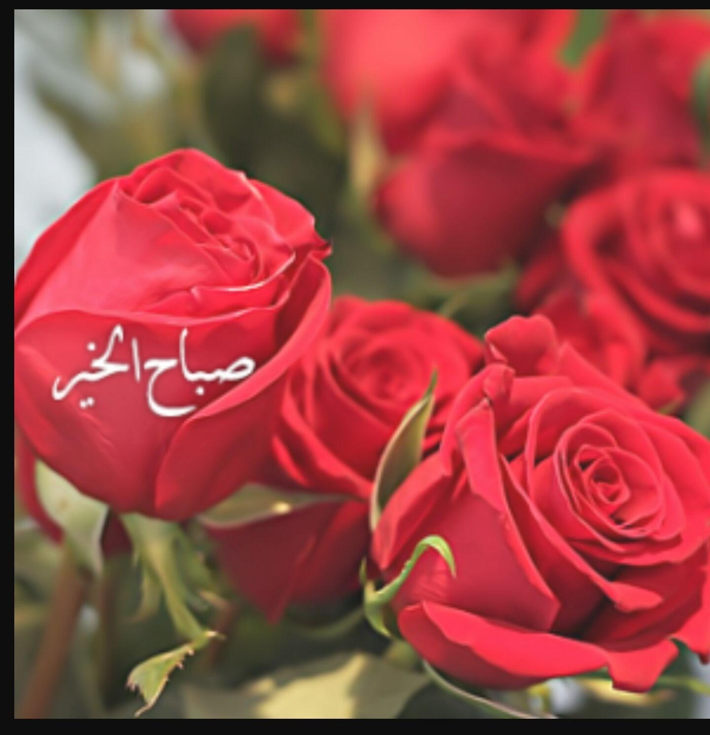 صوره صباح الورد حبيبي , عبارات لبداية اليوم للحبيب