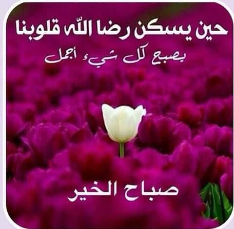 بالصور احلى صباح لحبيبي , صباح الخير علي حبي بالصور 2483 4