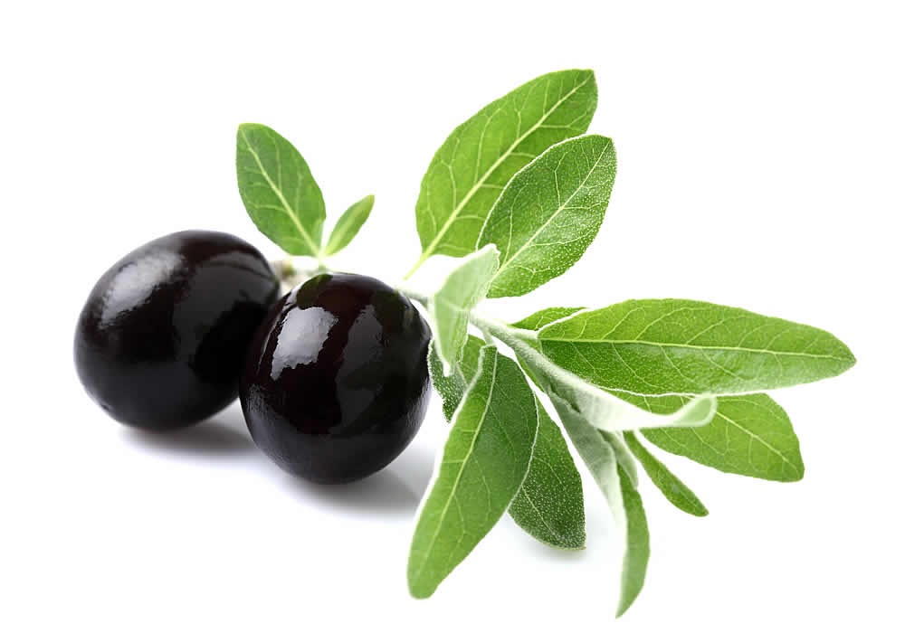 صوره فائدة ورق الزيتون , اهمية ورق الزيتون علاج اكثر من مرض