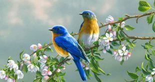 صور طيور جميلة , الطيور وجمالها