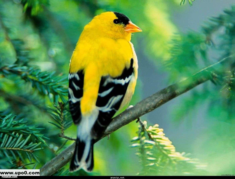 بالصور صور طيور جميلة , الطيور وجمالها 1789 2