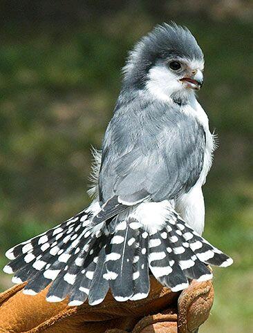 بالصور صور طيور جميلة , الطيور وجمالها 1789 3