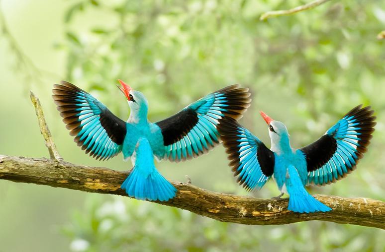 بالصور صور طيور جميلة , الطيور وجمالها 1789 4