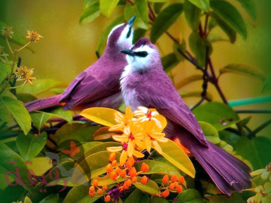 بالصور صور طيور جميلة , الطيور وجمالها 1789 5