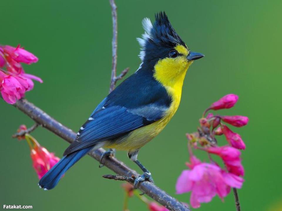 بالصور صور طيور جميلة , الطيور وجمالها 1789 7