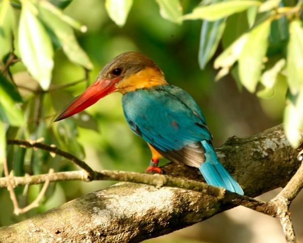 بالصور صور طيور جميلة , الطيور وجمالها 1789 8