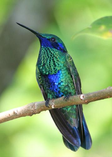 بالصور صور طيور جميلة , الطيور وجمالها 1789 9