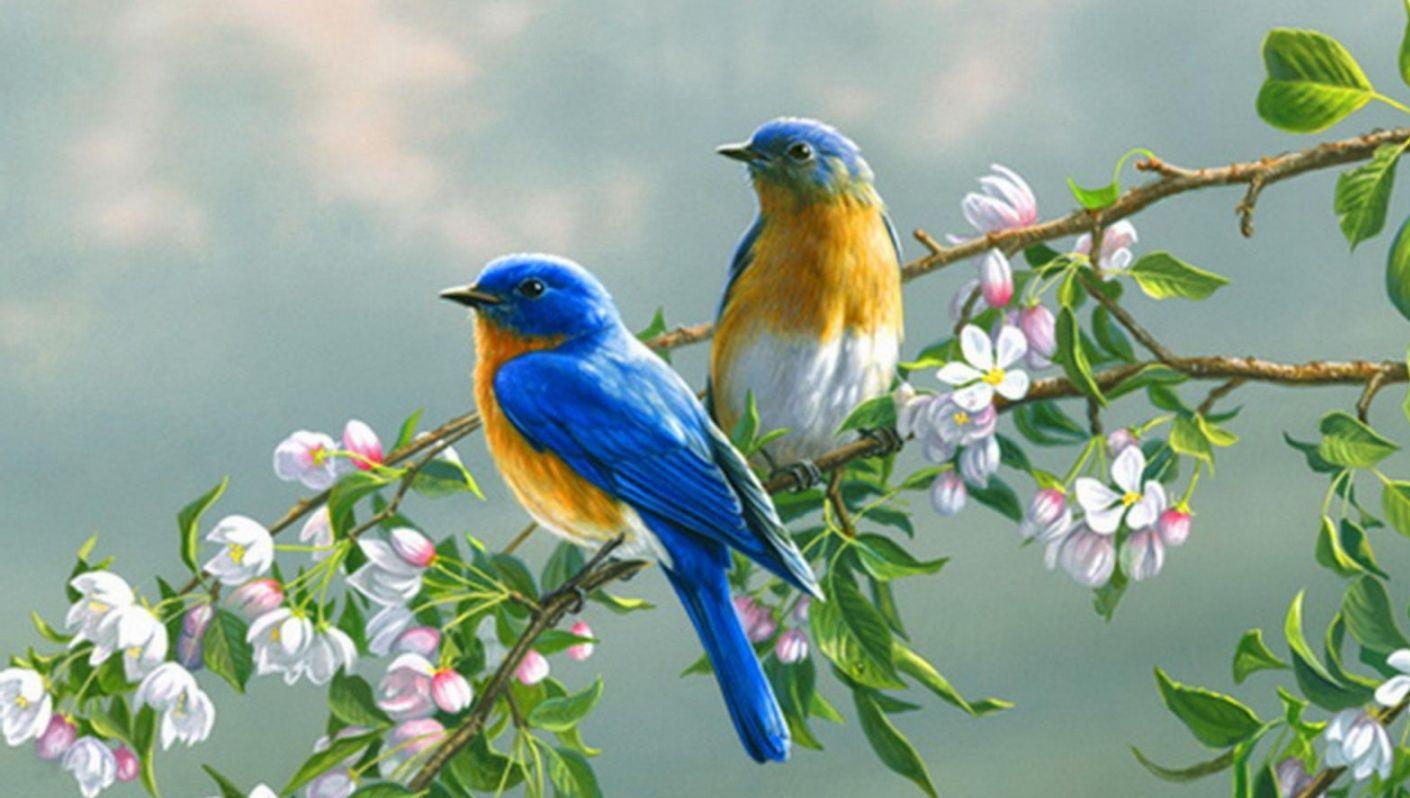 بالصور صور طيور جميلة , الطيور وجمالها 1789