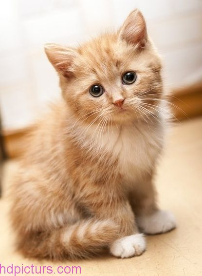 صوره صور قطط , قطة جميلة