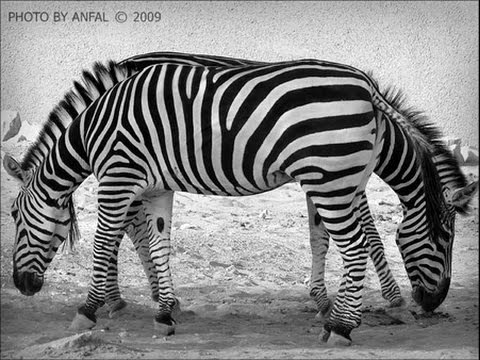 بالصور صور الخدع البصرية , عالم الخدع البصرية 1921