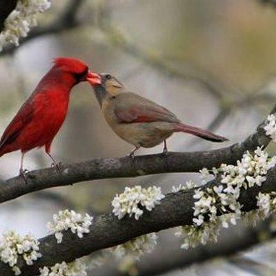 بالصور صور الطبيعة , اروع صور للطبيعة