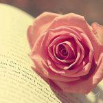 صورة وردة حمراء , اجمل زهور ملونه