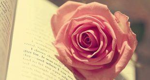صوره صورة وردة حمراء , اجمل زهور ملونه