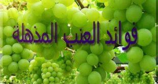 صور معلومات عن العنب , فوائد واستخدام الفواكه
