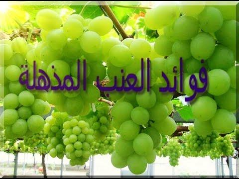بالصور معلومات عن العنب , فوائد واستخدام الفواكه 2392