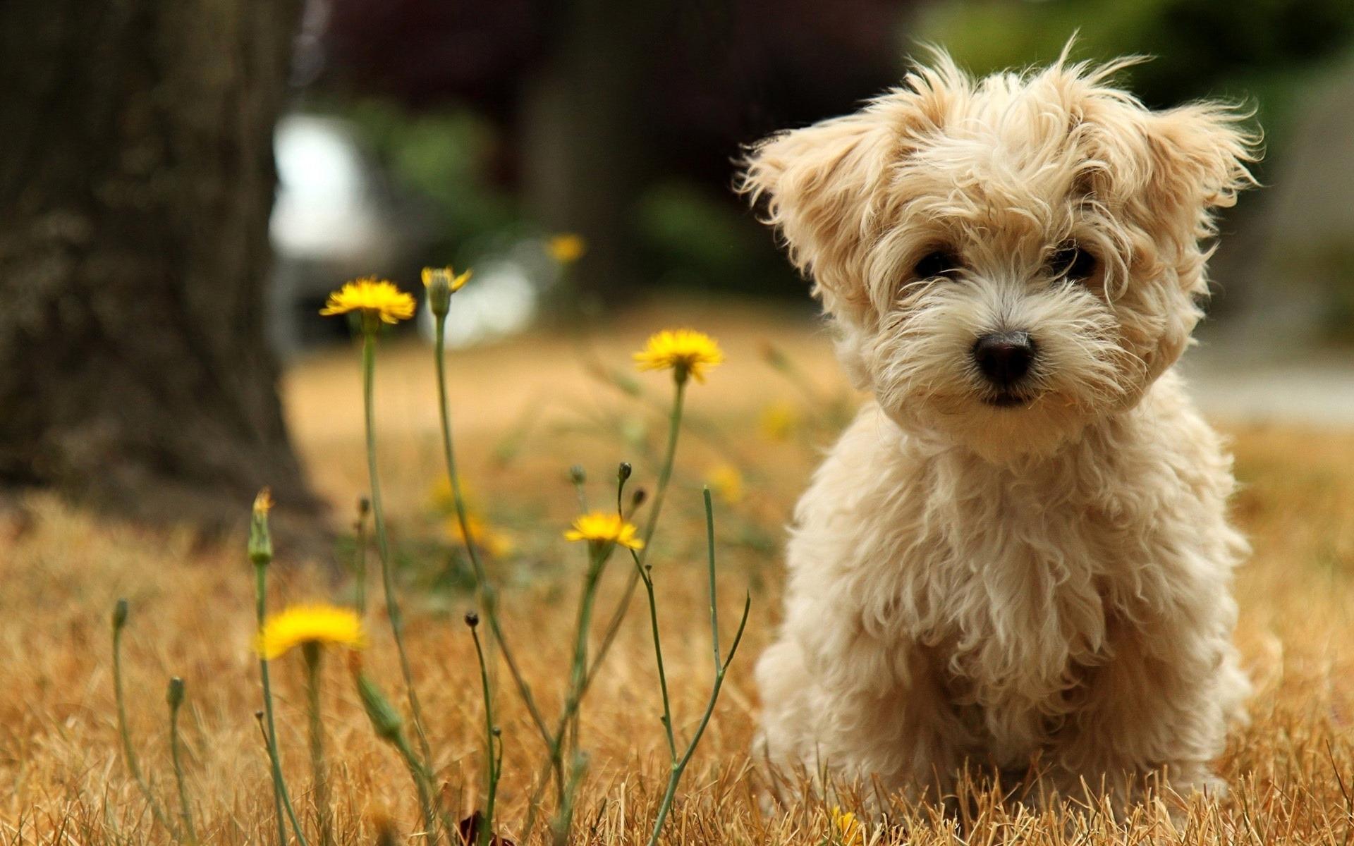 صوره رمزيات كلاب , اجمل صور للكلاب