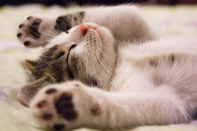 بالصور صور قطط صور قطط جديدة اجمل صور القطط , صورة احلى قطة 3756 3