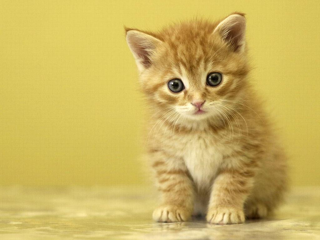 بالصور صور قطط صور قطط جديدة اجمل صور القطط , صورة احلى قطة 3756 5