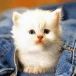 صور قطط صور قطط جديدة اجمل صور القطط , صورة احلى قطة
