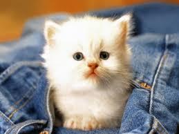 بالصور صور قطط صور قطط جديدة اجمل صور القطط , صورة احلى قطة 3756