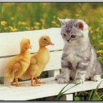 صور حيوانات جميلة جدا , اجمل صور للحيوانات