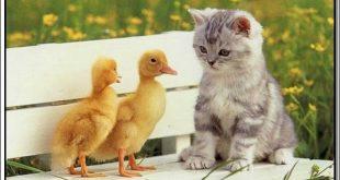 صوره صور حيوانات جميلة جدا , اجمل صور للحيوانات