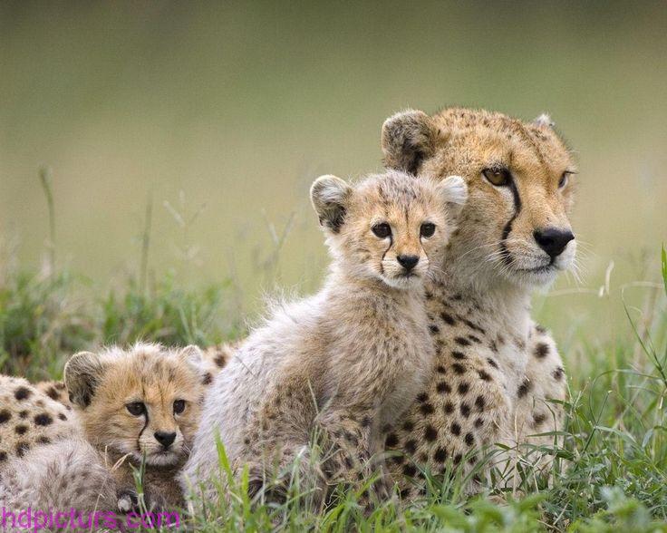 بالصور صور حيوانات جميلة جدا , اجمل صور للحيوانات 3826 2