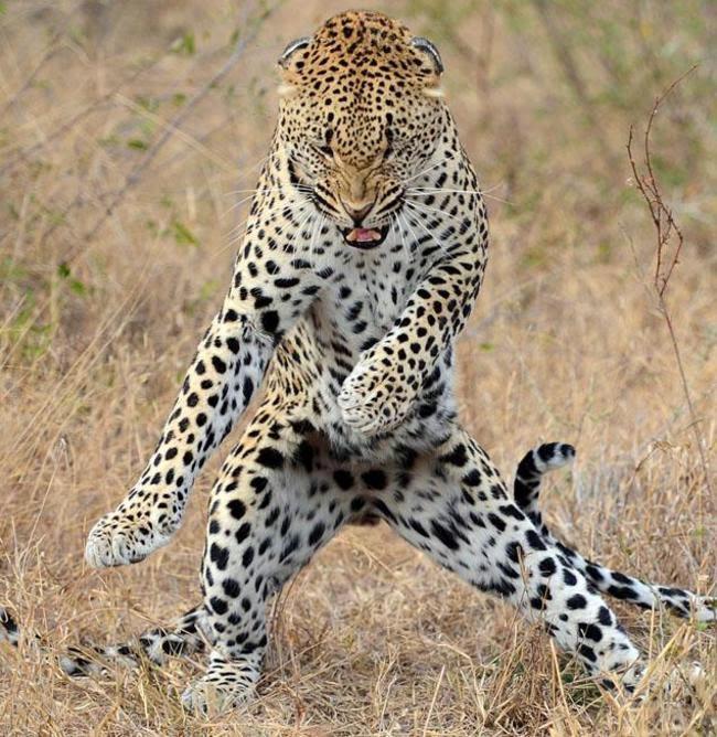 بالصور صور حيوانات جميلة جدا , اجمل صور للحيوانات 3826 5