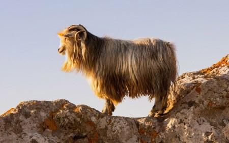 بالصور صور حيوانات جميلة جدا , اجمل صور للحيوانات 3826 6