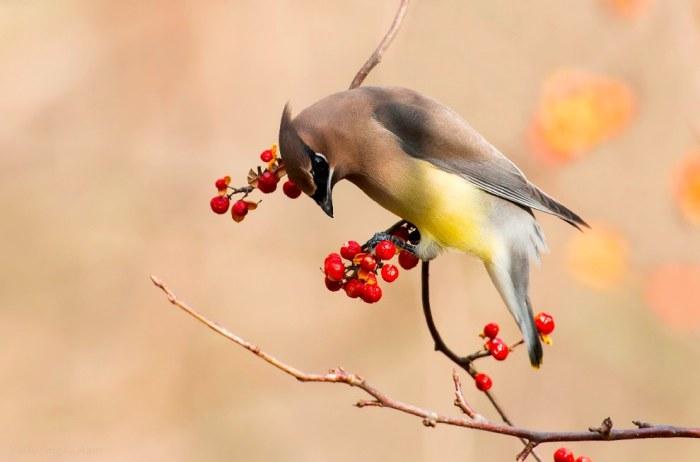 بالصور صور حيوانات جميلة جدا , اجمل صور للحيوانات 3826 7