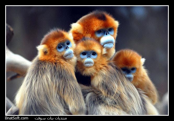 بالصور صور حيوانات جميلة جدا , اجمل صور للحيوانات 3826 8