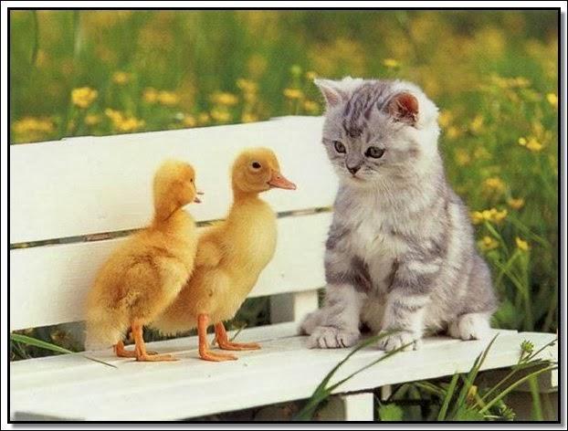 بالصور صور حيوانات جميلة جدا , اجمل صور للحيوانات 3826