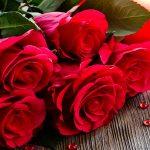 صور وردات خلفيات وردات حمراء , خلفيات ورود حمراء