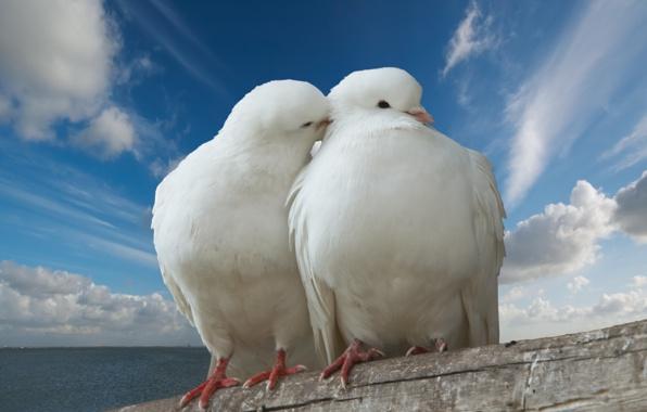 بالصور صور رومانسية صور حب وشوق صور جميلة , بوستات للعشاق 3884 5
