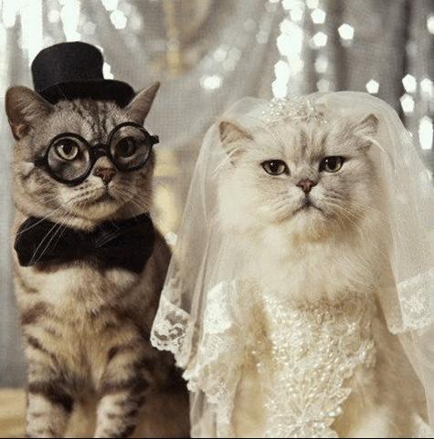 بالصور صور حيوانات تضحك صور للحيوانات مضحكة , بوستات مضحكة جدا 3930 1