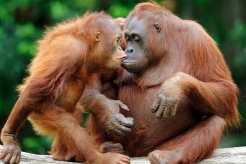 بالصور صور حيوانات تضحك صور للحيوانات مضحكة , بوستات مضحكة جدا 3930 2
