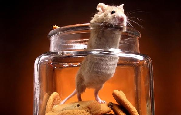 بالصور صور حيوانات تضحك صور للحيوانات مضحكة , بوستات مضحكة جدا 3930 8