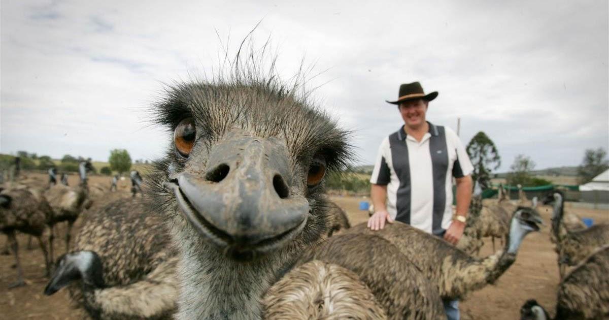 بالصور صور حيوانات تضحك صور للحيوانات مضحكة , بوستات مضحكة جدا 3930 9