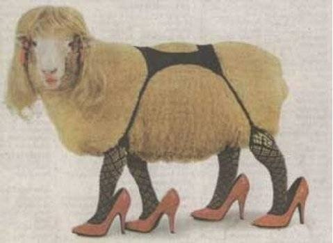 صوره صور حيوانات تضحك صور للحيوانات مضحكة , بوستات مضحكة جدا