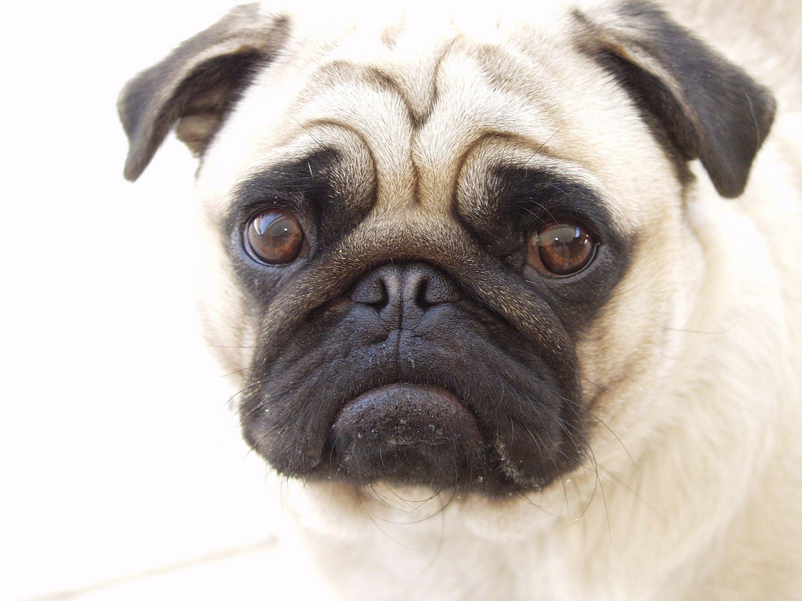 بالصور صور كلاب صور كلاب جديدة , خلفيات لكلب حراسه 4052 3