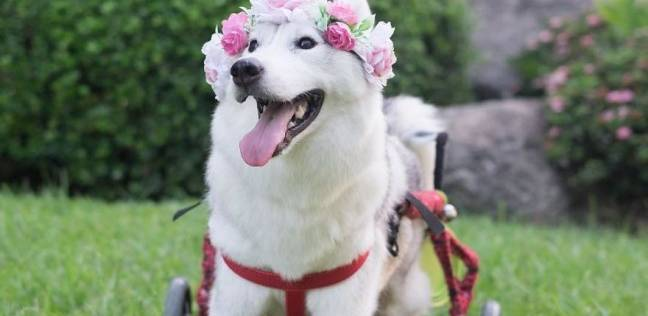 بالصور صور كلاب صور كلاب جديدة , خلفيات لكلب حراسه 4052 5