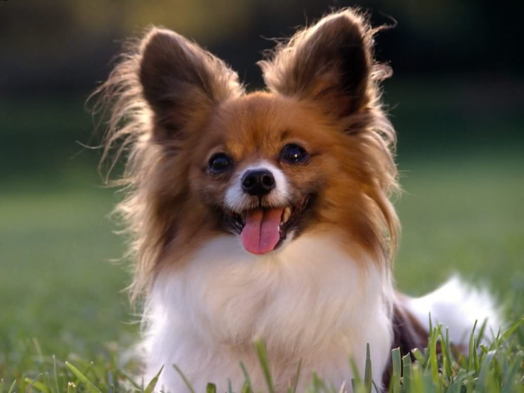 بالصور صور كلاب صور كلاب جديدة , خلفيات لكلب حراسه 4052 6