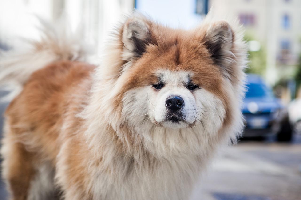 بالصور صور كلاب صور كلاب جديدة , خلفيات لكلب حراسه 4052 7