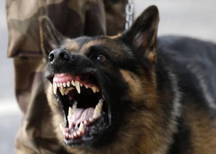 بالصور صور كلاب صور كلاب جديدة , خلفيات لكلب حراسه 4052 8