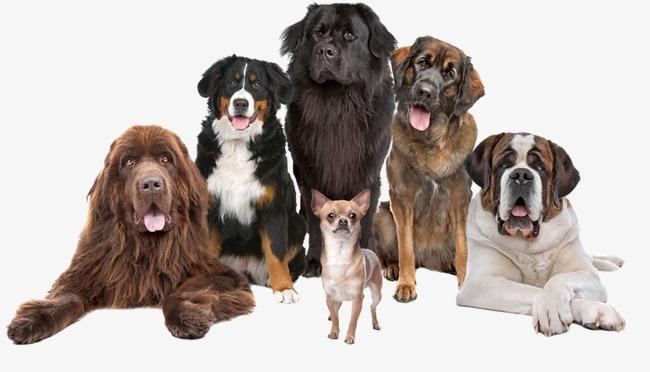 صوره صور كلاب صور كلاب جديدة , خلفيات لكلب حراسه