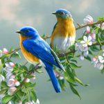 صور طيور حلوة صور اجمل الطيور فى العالم صور طيور كيوت صغيرة